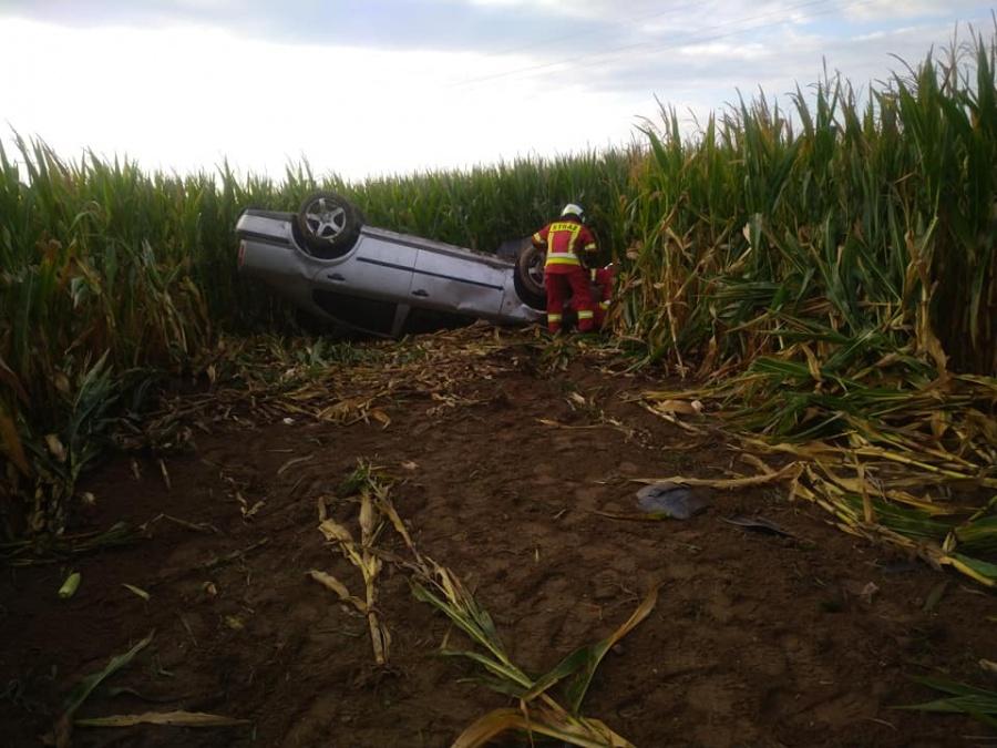 Dachowanie w polu kukurydzy